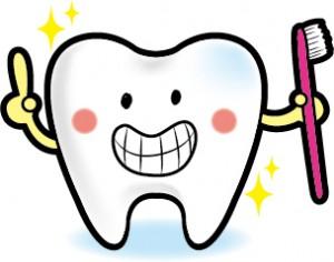 キレイに磨かれた歯